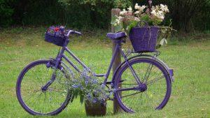 Lavendelblütenfest im Erlebnisgarten